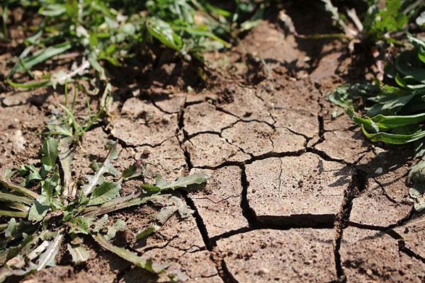 Les dégâts liés à la sécheresse nécessitent une bonne gestion des pâturages !
