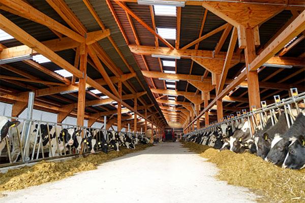 JOSERA Rinder im Stall im Fressständer