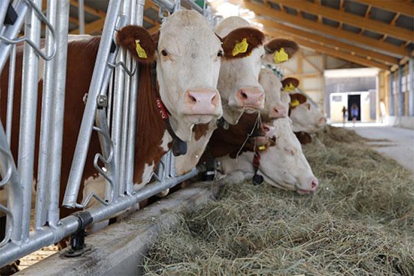 La conjoncture laitière 2019/2020 - Quel sera l'avenir après le COv2 et Covid19