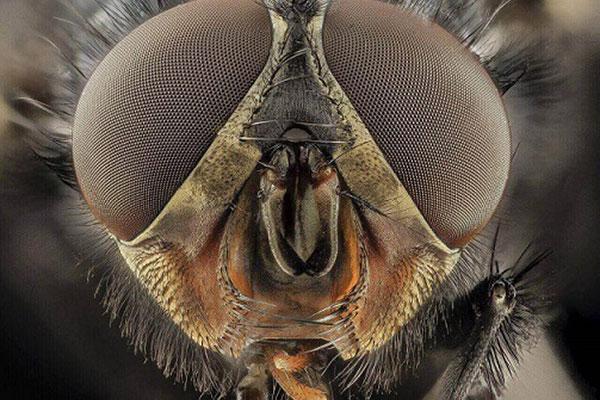 Lutte contre les mouches
