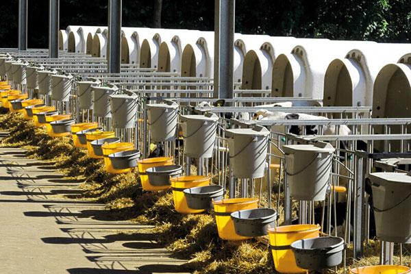 Concept pratique pour la ration complète mélangée des veaux