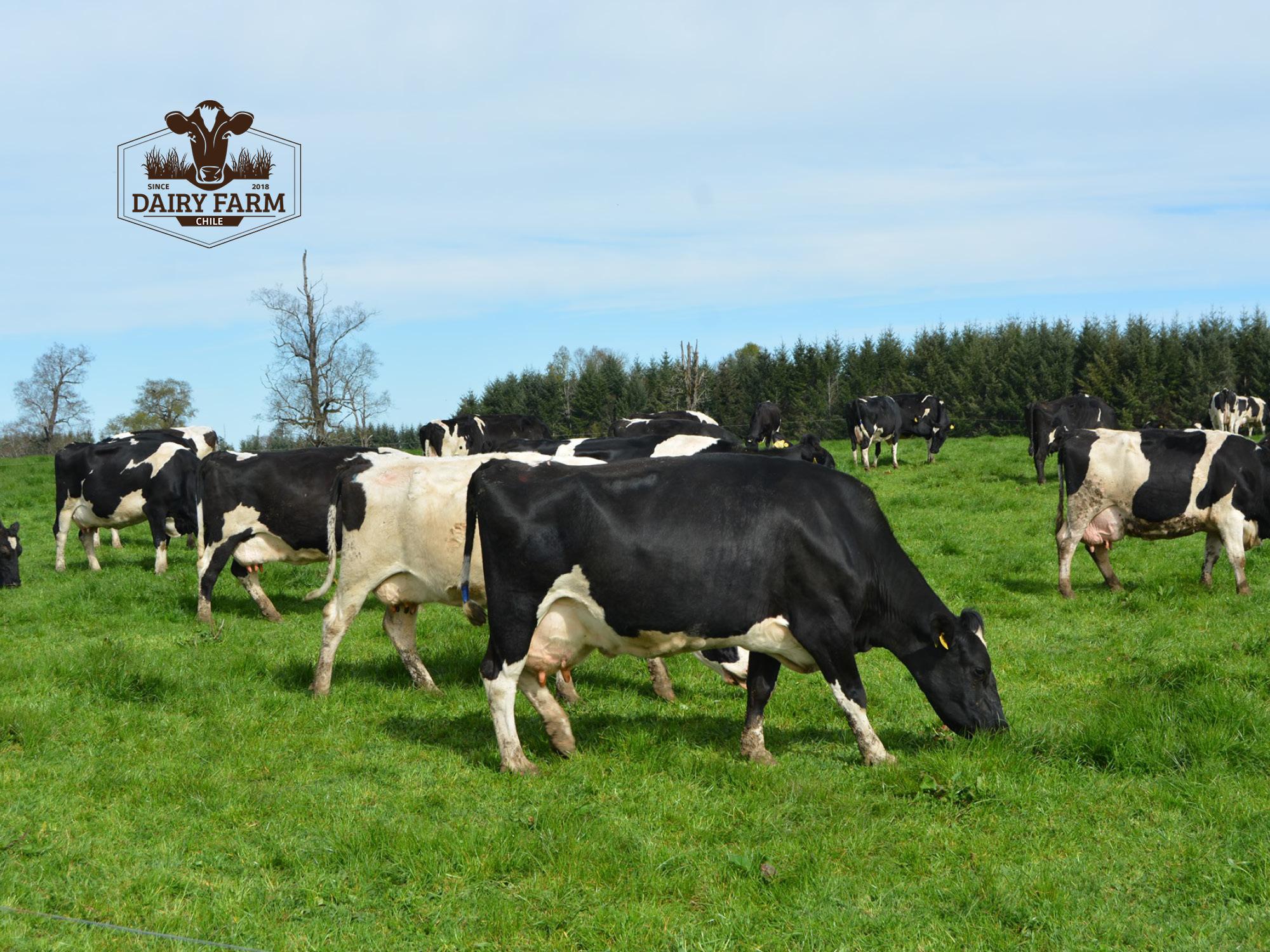 JOSERA DairySafe - Contre la métrite après le vêlage
