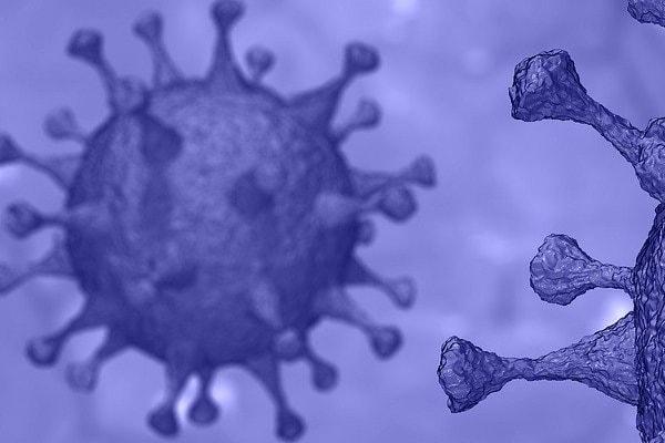 Le coronavirus chez les bovins ?