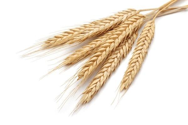 JOSERA Céréales