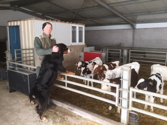 JOSERA IgluVital -  la poudre de lait pour les veaux nouveaux-nés