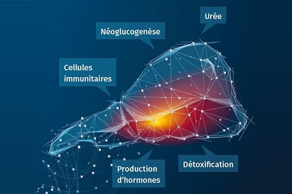 JOSERA DairySafe – Pour éviter la stéatose hépatique (syndrome du foie gras) et améliorer le métabolisme du foie