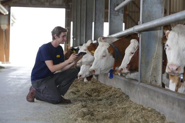 L'élevage laitier et les antibiotiques : comment l'alimentation des bovins peut-elle aider?